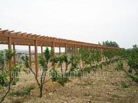 安徽合肥生态园