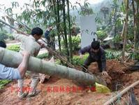 广州竹韵山庄中国竹文化园林绿化景观