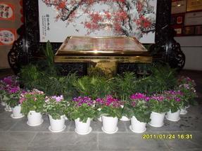 上海绿化公司|上海绿化租摆|植物销售|室外绿化养护
