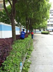 绿化养护-绿篱修剪