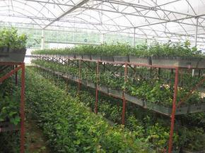 茂名农场灌溉自动控制系统