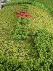 LOGO设计仿真植物墙人造植物墙