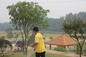 绿化养护-浇水(13975878175)