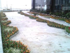 成都租赁;植物花卉