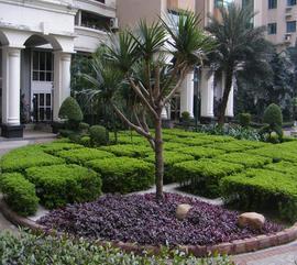 承接佛山市厂区工厂别墅花园园林绿化景观设计等园林绿化种植工程