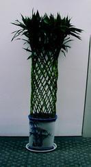 昆山绿化公司绿化养护