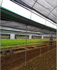 温室大棚【顶部开窗型】连栋蔬菜大棚
