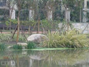 上海金地格林世界吾尚塘800吨金山石景观工程