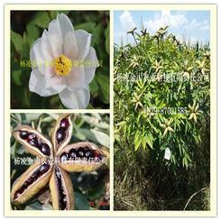 发展木本油料产业  建立美丽陕西