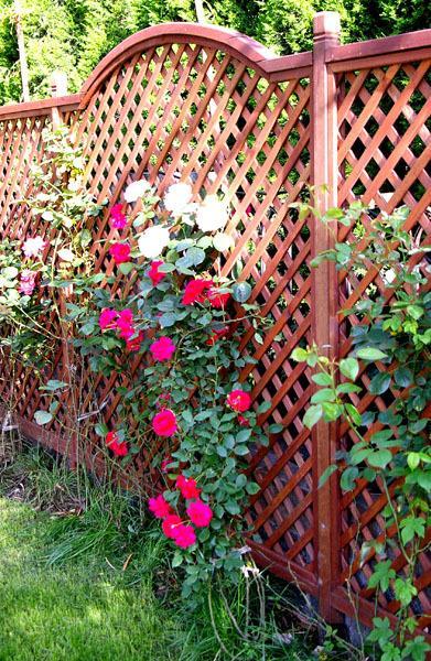 景观花栅栏手绘