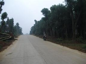 高中低档湖南益阳香樟树批发供应大型基地