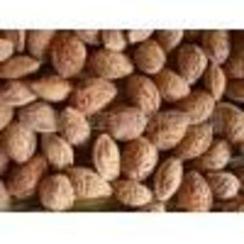 .供应国槐籽,毛桃核,山桃核,杏核,白皮松籽,油松籽