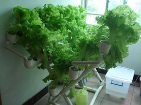 用PVC塑料水管种植蔬菜花卉,信吗?