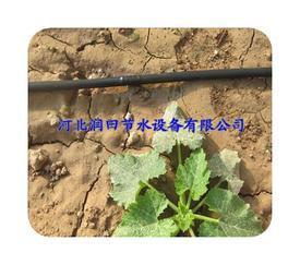 涞水县西红柿灌溉黑管 保定市大棚蔬菜滴灌管