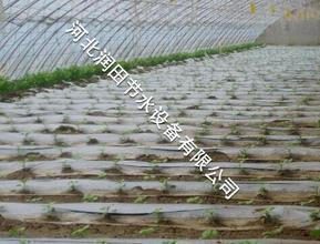 滴灌厂家 保定市定兴县灌溉软带产销厂家