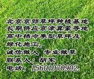 北京草坪基地 北京草坪销售 北京草坪价格 北京草坪厂家 北京草坪