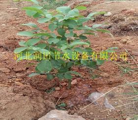 阜平县红枣果树滴灌毛管 保定市实用滴灌系统