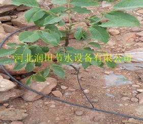 阜平县果树滴灌效果好 保定市葡萄果树滴灌毛管