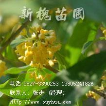 供萱草、玉簪、鸢尾、红花酢浆草、葱兰