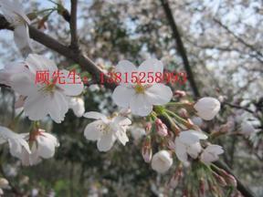 苏州别墅绿化,苏州景观绿化工程