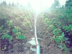农田灌溉 节水喷灌微喷带