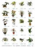 室内观赏植物租赁