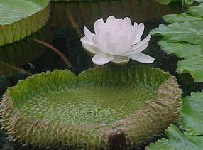 供应各种水生植物