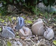 多彩溪石鸟雕刻GAB517