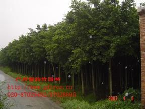 园林工程苗木配送
