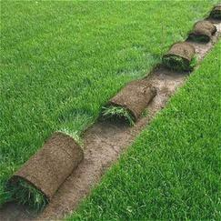 绿洲草坪种植场