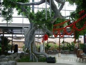 山西生态园GRC仿真榕树