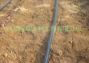 鹤壁山城区小麦大田微喷带品质好 大田微喷 喷雾带