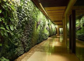 广州植物绿墙的强大作用