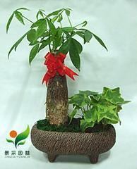 办公室植物租赁,室内盆栽