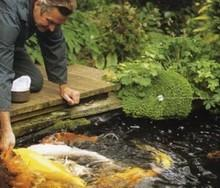KOIN生态鱼池