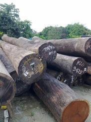 供应樟子松板材 山樟木板材 菠萝格材料