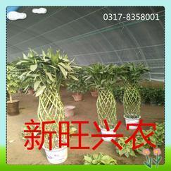 新旺兴农聚氯刚管保温大棚7511养殖大棚