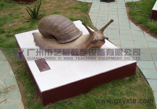 供应软体动物模型蜗牛