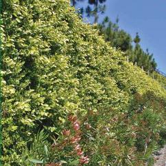 绿生型生态砌块