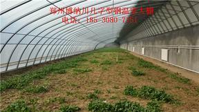漯河简易骨架温室建造,博纳川厂家直销定制
