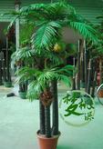 椰子树、仿真树、仿真棕榈树