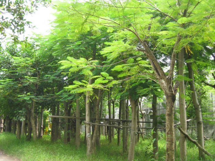 桦树茸矢量图