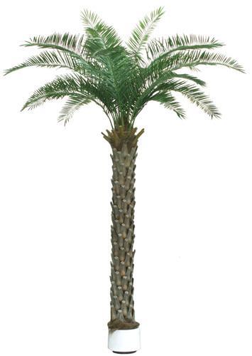 棕榈植物ps素材图片