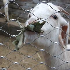 动物园不锈钢绳网,商场装饰金属绳网,钢丝绳网厂家