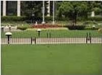 草坪种子-北京阳光草业草坪科技沙龙365