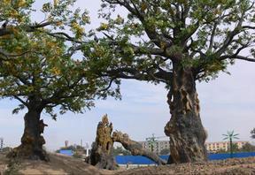 水泥仿真树设计施工