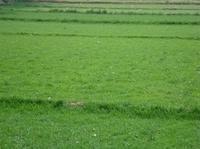 北京草坪销售北京卖草坪早熟禾草坪种植基地天津草坪销售