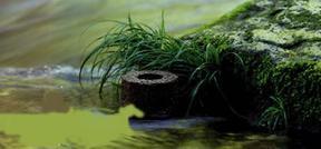 日本碧の奥活水素材
