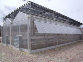 温室大棚/蔬菜大棚/育苗大棚建设