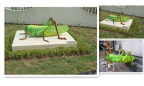 节肢动物蝗虫/动物模型/生物模型/标本